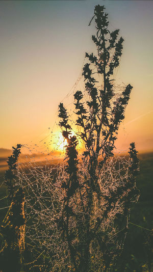 Artistic Beauty In Nature Close-up Meadow Morning Spider Spider Web Spiderweb In Morning Dew Sunrise Silhouette Sunset Tranquility Water