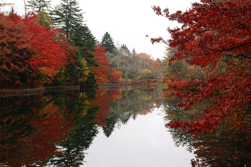 Autumn colors Trees Forest Tree Reflection Water Lake Plant Autumn Nature Outdoors Tranquility Red