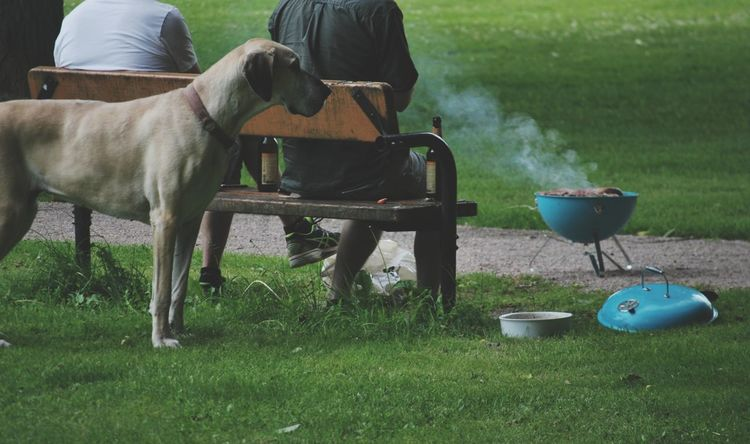 Grass Adult Outdoors Domestic Animals People Day Adults Only Only Men Urban Exploration EyeEm Gallery Dog Bench Togetherness Grass Sommergefühle 100 Days Of Summer Pet Portraits Food Stories This Is Family