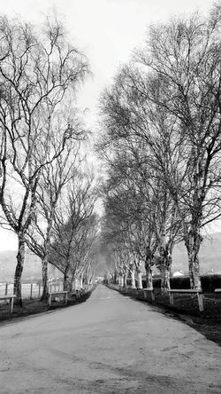 Clouds And Sky Weird Trees Landscape Landscape_Collection English Countryside Nature Sky Sky And Clouds Tree Trees Tree And Sky Black And White Blackandwhite Sky_collection Pathway Drive Way Trees In A Row Row Rows Of Things Fields