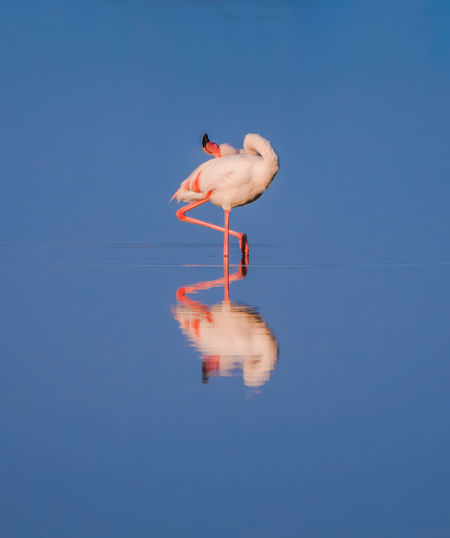 Reflection Of Bird On Water