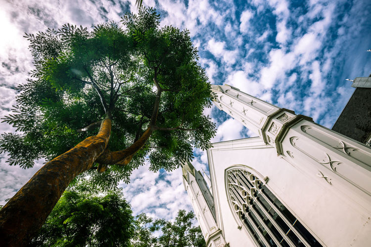Nurtured by Nature; Created by Man Low Angle View Architecture Cathedral Nature Tree Blue Sky Nature Vs Concrete The Architect - 2018 EyeEm Awards