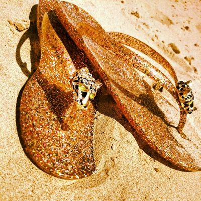Beach Tiger Flipflop Sun sea sand