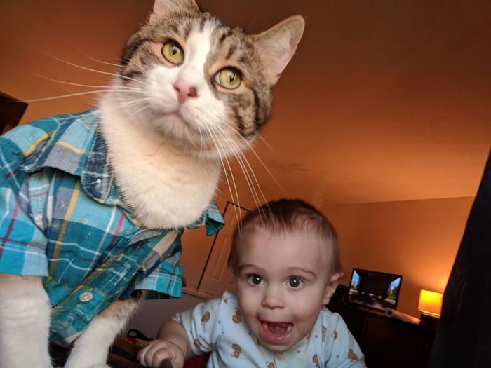 EyeEm Selects Pets Portrait Child Childhood Togetherness Looking At Camera Girls Domestic Cat Sitting Headshot Tabby Cat Kitten Tabby Young Animal Friend Cat Toddler  Infant Duckling Single Parent Babyhood Alertness EyeEmNewHere