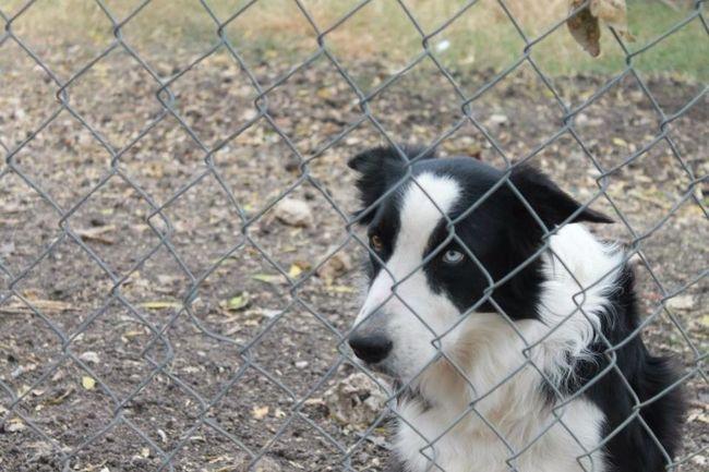 Doggy :D