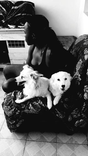 New family members. Candid Portraits Woman's Face Woman Dogs Floral Pattern Dogs Of EyeEm Chiwawa Japanese Spitz Monochrome Blackandwhite Purebred Dog Chihuahua - Dog Canine