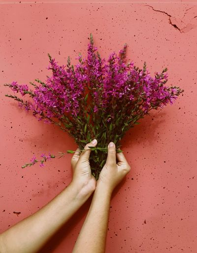 Close-up of woman hand on pink flowering plant against pink background