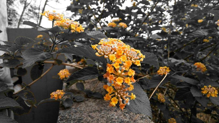 Natureshots Colorsplash Monsoonseason Monsoonmagic Monsoonblossom Monsoonbloom 43 Golden Moments The Innovator