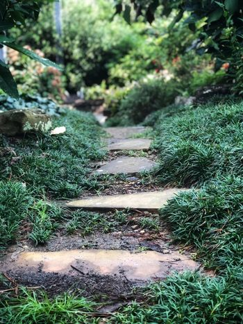 Down the path, where it leads nobody knows Plant Green Color Growth No People Tree Nature Land Outdoors Tranquility High Angle View Grass Beauty In Nature Sunlight Direction The Way Forward Day Field Tranquil Scene Forest Non-urban Scene