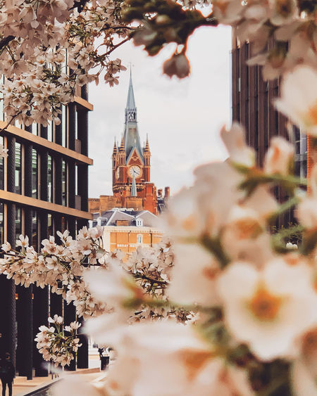 Clock tower seen from flowers in city