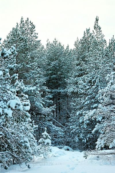 Cold Winter ❄⛄ Nature_perfection Snow Covered Branch Snowy Trees Winter Trees Showcase: January January Winter_collection Winter Day Snowy Winter 2016 Wintertime Winter Winter Season Winter Forest Snow Covered Snowcapped Nature_collection