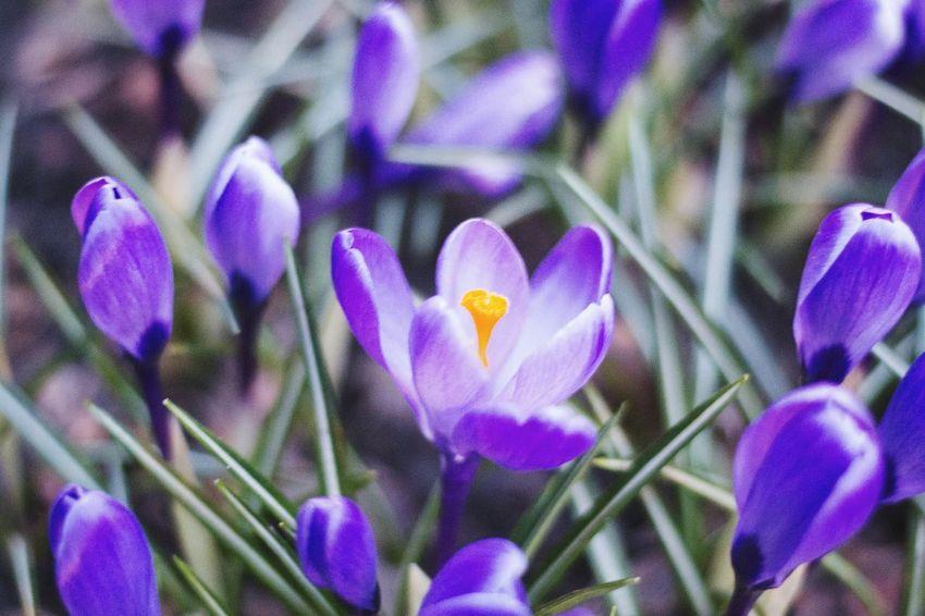 Bealtiful Nature Purple Flower Beauty In Nature Flower Head