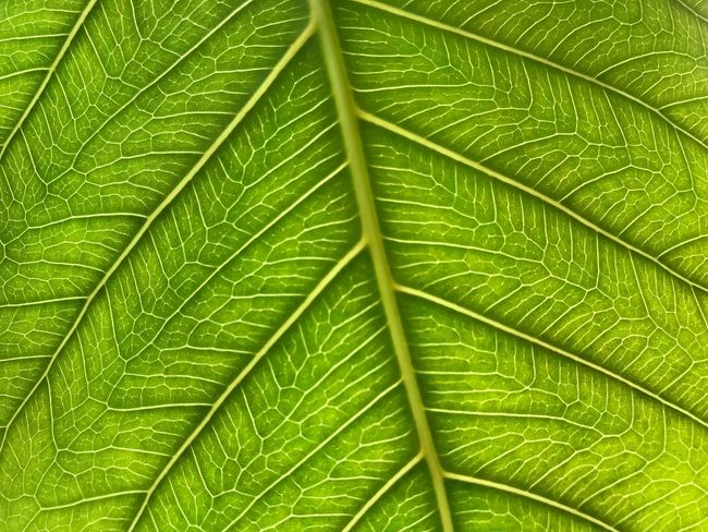 Leaf Green Color Close-up Freshness Backgrounds Nature Day
