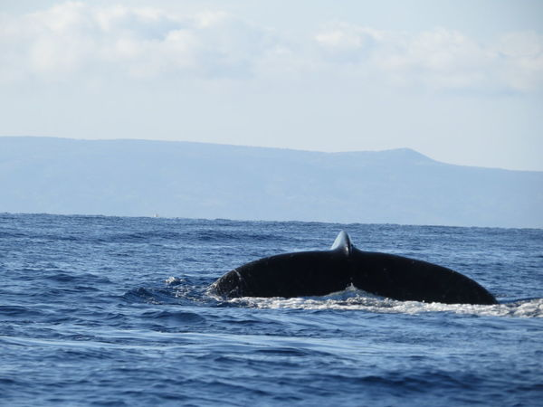 whale watching Maui Hawaii...03.2014 Aquatic Mammal Beauty In Nature Day Early Morning Horizon Over Water Humpback Whale Idyllic Lahaina Bay Mountain Nature Ocean Outdoors Remote Rippled Rock - Object Rock Formation Scenics Sea Seascape Sky Tranquil Scene Tranquility Water Waterfront Whale Watching