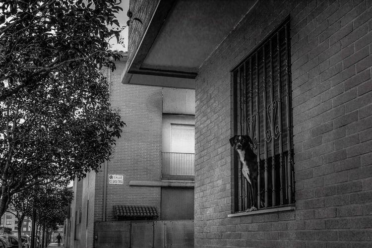 Dog Streetphotography Blackandwhite Photography Photooftheday