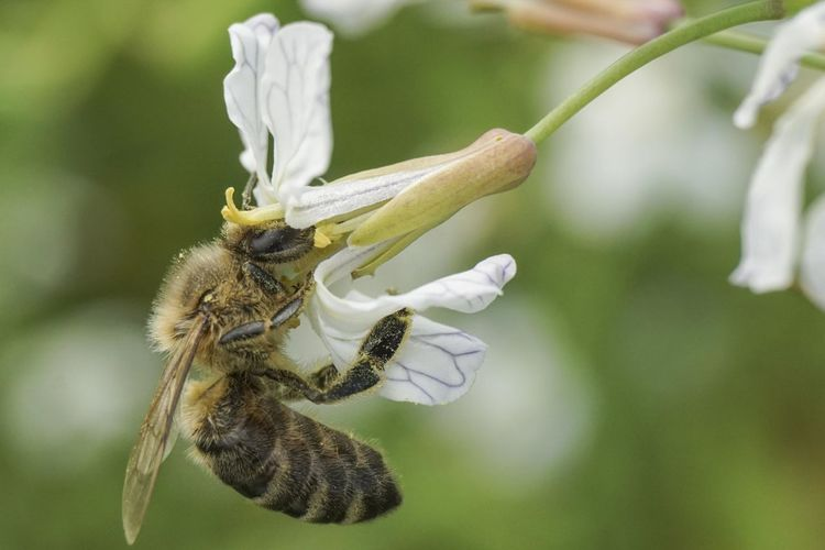 Animal One Animal Insect Plant Animal Themes Flower Invertebrate Animals In The Wild Animal Wildlife Flowering Plant Close-up Bee Focus On Foreground Beauty In Nature Fragility Vulnerability  Nature Petal Freshness No People Flower Head Outdoors Pollination Pollen