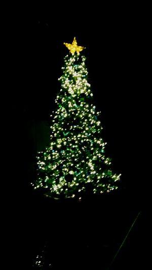 Christmas Tree Christmas Tree Christmas Decoration Christmas Lights Illuminated No People Night Outdoors