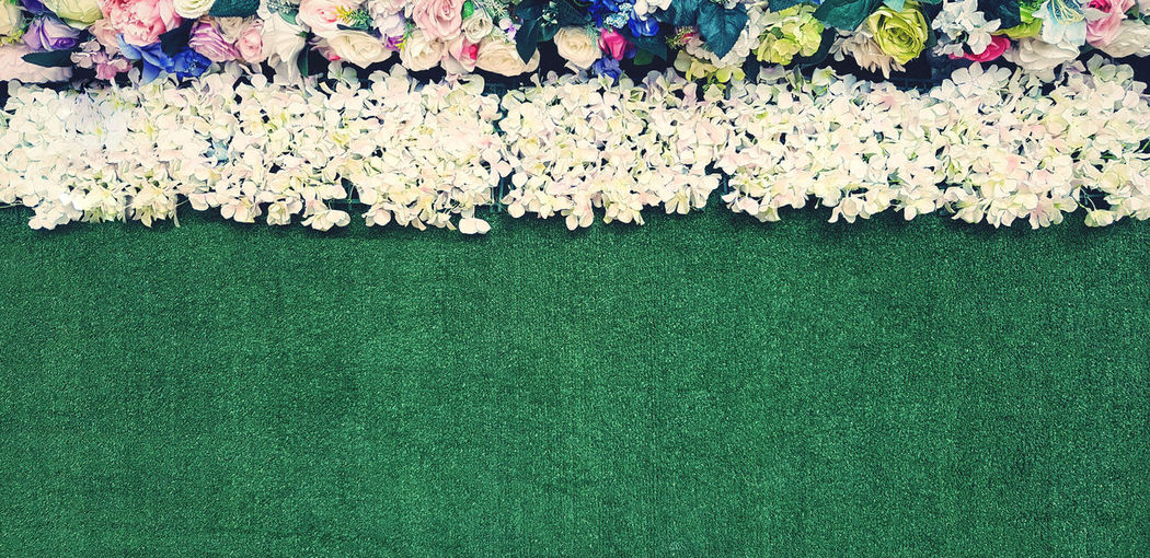 Directly above shot of white flowering plants on grass
