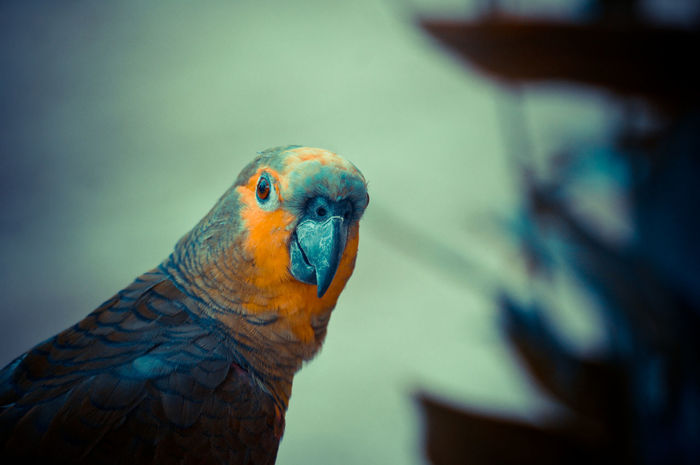 Bird Photography Nature_collection EyeEm Nature Lover
