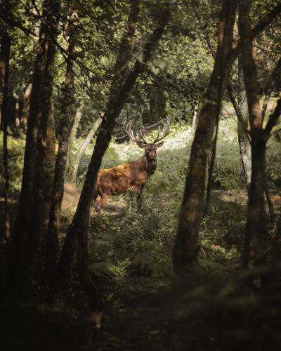 oh deer Animal