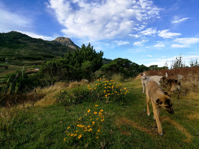 Amigos caninos... Dogs Animal Themes Beauty In Nature Cloud - Sky Day Dog Domestic Animals Field Grass Growth Landscape Mammal Mountain Nature No People One Animal Outdoors Sky Tree Volcanic Landscape Volcano
