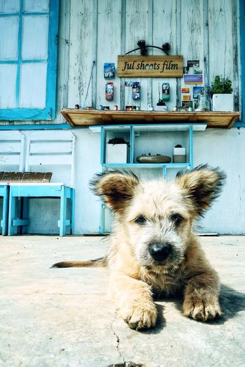 Portrait of dog by building