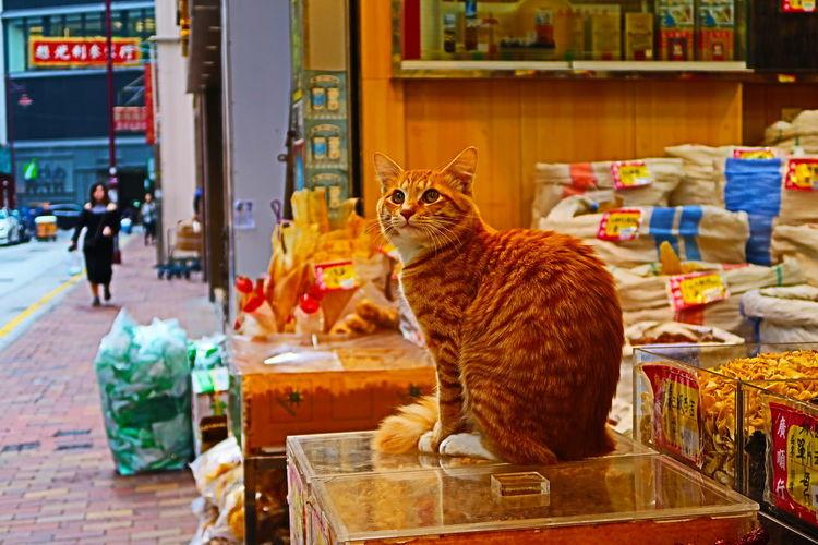 Cat Market Day
