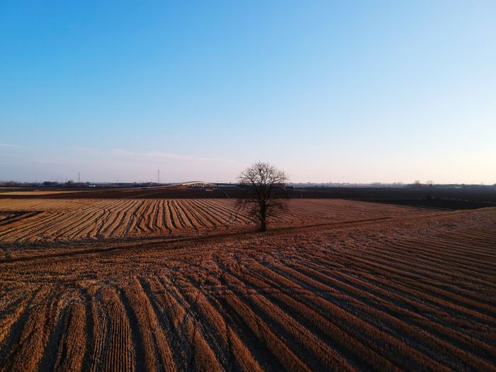 Dji Spark DJI X Eyeem Agriculture Field Landscape Beauty In Nature Rural Scene Tranquility Tranquil Scene Nature Bare Tree No People Outdoors Clear Sky Day Scenics