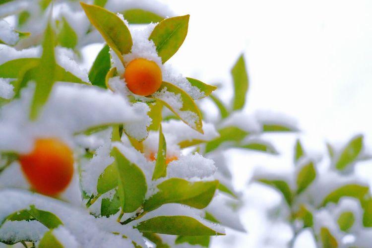 フィルターがおかしかったのか、こないだアップした写真にノイズが入ってたので改めて EyeEm Nature Lover Snow Cold Days Garden Plants Macro FUJIFILM X-T1 NFD50macro