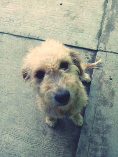 Jaltipan My Dog I Love My Doglucho, el perro mas inteligente que he visto