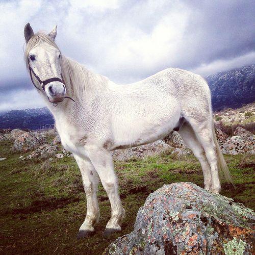 Pegaso, el rey de la Sierra de Guadarrama Horses Nature Sierra De Guadarrama Madrid