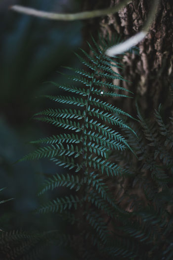 Plant Leaf Growth Plant Part Selective Focus Close-up Green Color Tree Beauty In Nature No People Nature Day Fern Outdoors Tranquility Natural Pattern Healthcare And Medicine Spiked Backgrounds Land Pine Tree Spiky Coniferous Tree