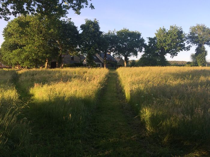 Path through grass cottage trees Plant Tree Growth Tranquility Tranquil Scene Field Land
