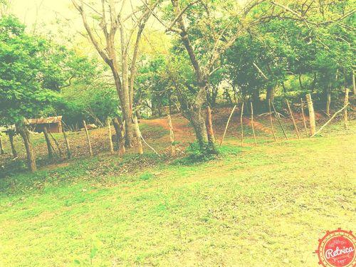 En El Campo Taking Photos Green Trees