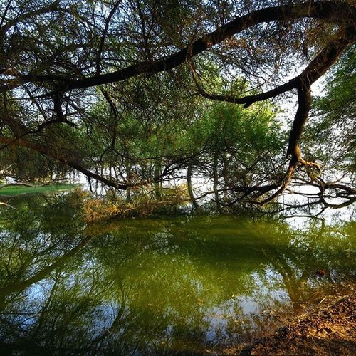 Thol Bird Sanctuary, Ahmedabad,Gujarat Thol Ahmedabad Instaahmedabad Gujarat India Travel Nature Landscape Photography Nature_brilliance Photoarena_nature Canonsx50 Canon_official Ourplanetdaily Naturelover_gr