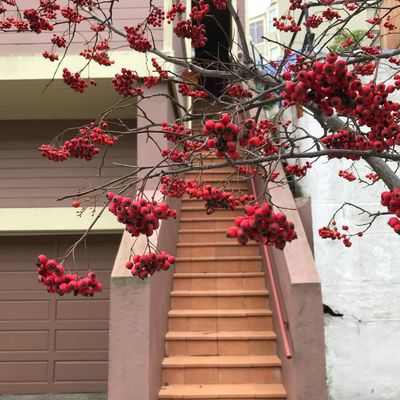Red Berries EyeEm Selects Red Flower Growth Low Angle View No People Tree