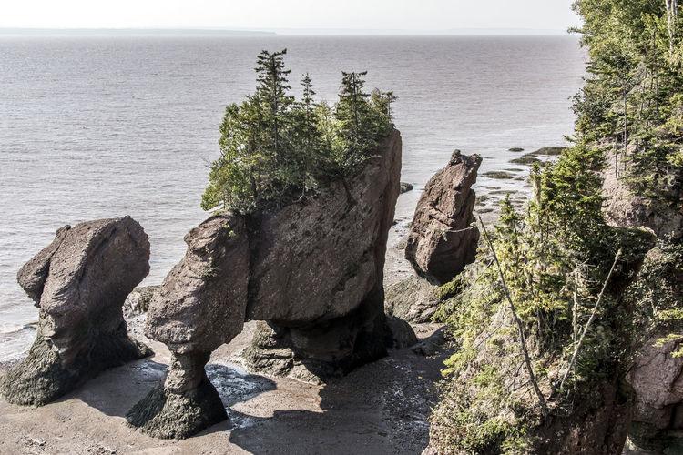 Plants growing on rock by sea against sky