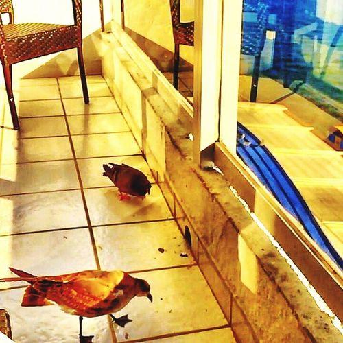 Miami Florida ☀️ 🇺🇸 Getting Creative Eyeem4photography EyeEmBestPics EyeEm Birds Golden Hour Hdr_Collection Photography EyeEm Best Shots EyeEm EyeEm Gallery