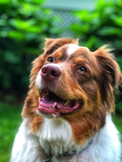 A Best friend for life Pets One Animal Domestic Dog Canine Domestic Animals Mammal Animal Themes Animal Vertebrate Focus On Foreground Animal Body Part Brown No People Close-up Animal Head  Facial Expression Looking Day Looking Away