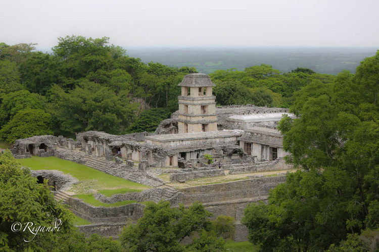 mayan architecture Ancient Ancient Civilization Architecture Built Structure Day History Nature No People Old Ruin Outdoors Scenics Sky Travel Destinations Tree