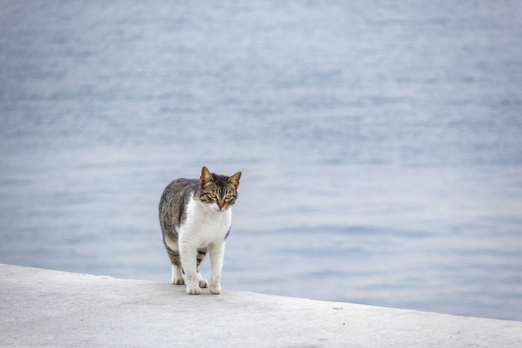 Cat looking away while standing on sea shore