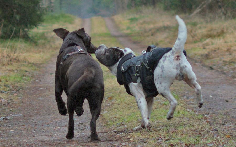 Best friend kiss Kiss Kuss Küsschen Playing Dog Hund Hunde Dogs No People Outdoors Day Nature Natur Animal Pets Motion Togetherness Animal Themes Retriever Labrador Labrador Retriever Shar Pei