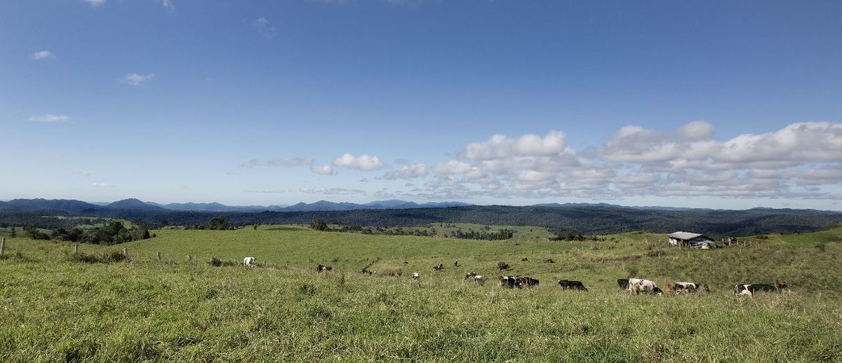 Serenity Tablelands, Nth Queensland, Australia Beauty In Nature Cows Daytime Photography Farm House Grass Green Pastures Blue Skies Landscape Livestock Mountain Nature No People