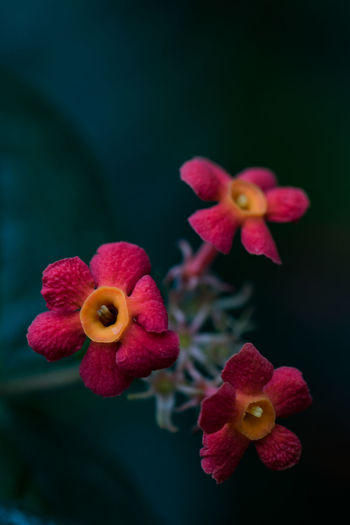 Japan Tokyo Beauty In Nature Close-up Flower Flower Head Flowering Plant Focus On Foreground Fragility Freshness Growth Inflorescence Nature No People Orchid Outdoors Petal Pink Color Plant Pollen Red Selective Focus Vulnerability