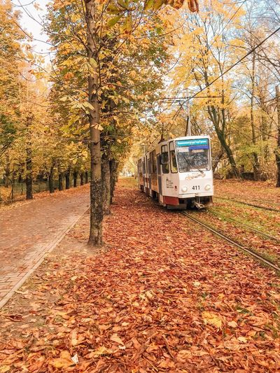 Tree Transportation Autumn Mode Of Transportation Land Vehicle Nature Plant Plant Part City Street Sunlight Change Land No People Motor Vehicle Leaf Day Field Growth Outdoors