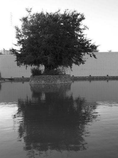 Nature Reflection Beauty In Nature Blackandwhite Day Nature Reflection Scenics Tranquility Water Waterfront árbol