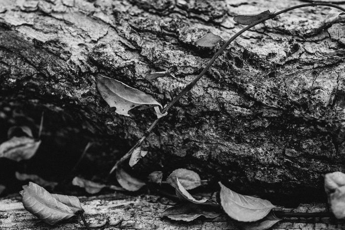 Bnw_collection Bnw Black & White Black And White Blackandwhite Nature Day No People Plant Part Leaf Plant Close-up