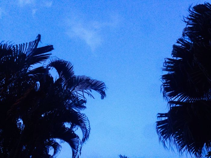 You Name It Low Angle View Blue Palm Tree Tree Beauty In Nature No People Sky Nature Growth Silhouette Outdoors Clear Sky Tranquility Day Scenics