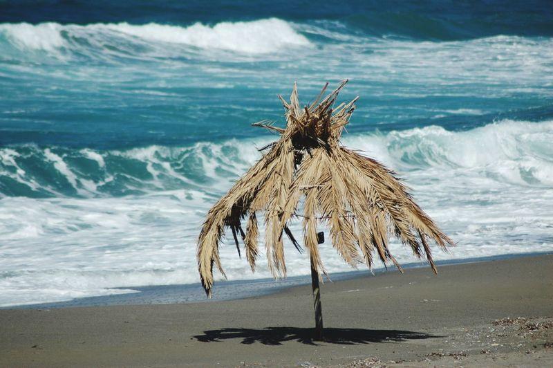 Natural beach umbrella