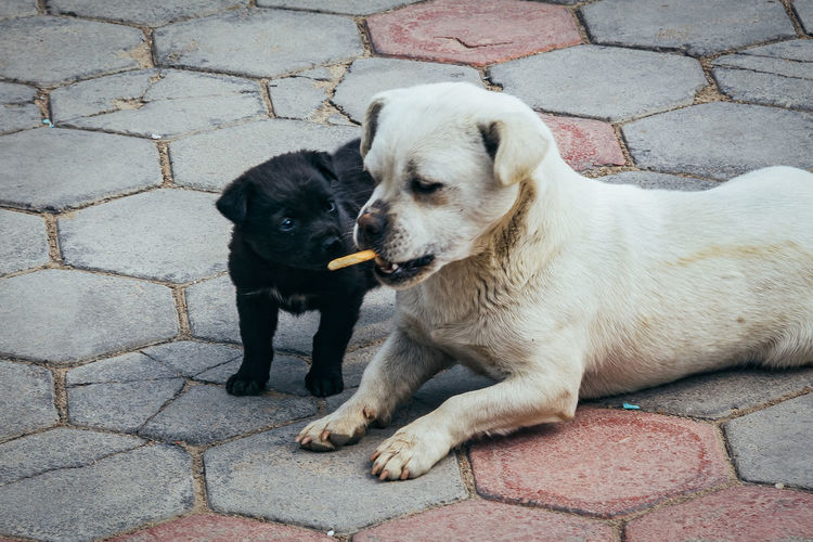 Close-up of puppies eating cookie on paved walkway